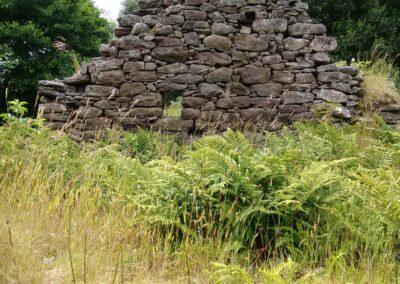 Overgrown croft byre before clearance Isle Martin